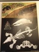 SUUR ILUS ÕPPEPLAKAT PAPPALUSEL 83 x 115 cm